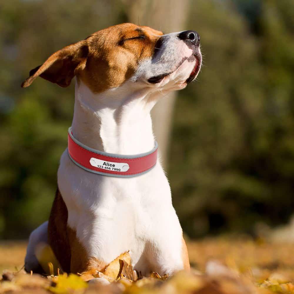 15e1e7c3ecfdc08716fa70ec2c59243f - Halsband hond met naam en telefoonnummer leer reflecterend