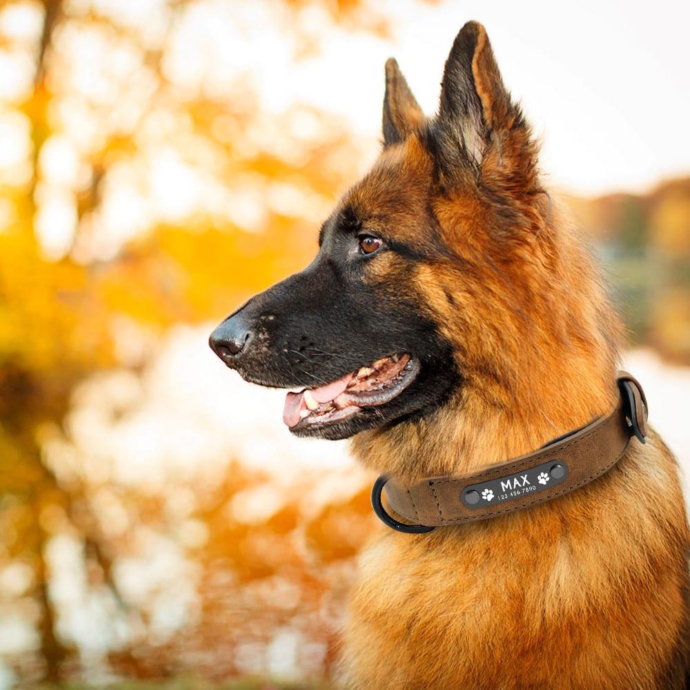 20e5629c9565e59d8424eb391dbc27a9 - Halsband hond met naam en telefoonnummer gevoerd leer