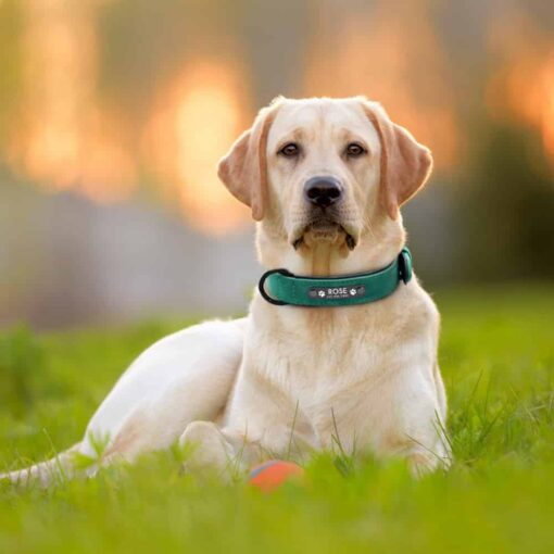 Halsband hond met naam en telefoonnummer gevoerd leer