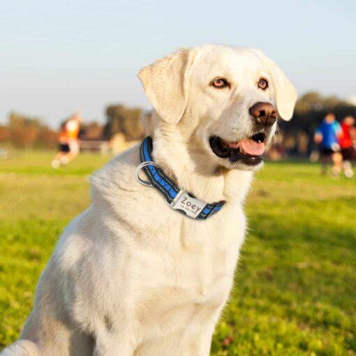 Halsband hond met naam en telefoonnummer reflecterend