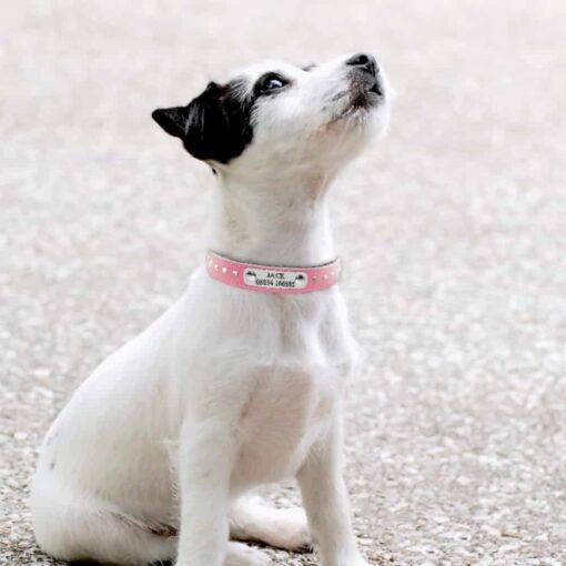 30452 l99a3z 510x510 - Halsband met naam en telefoonnummer hond of kat leer steentjes