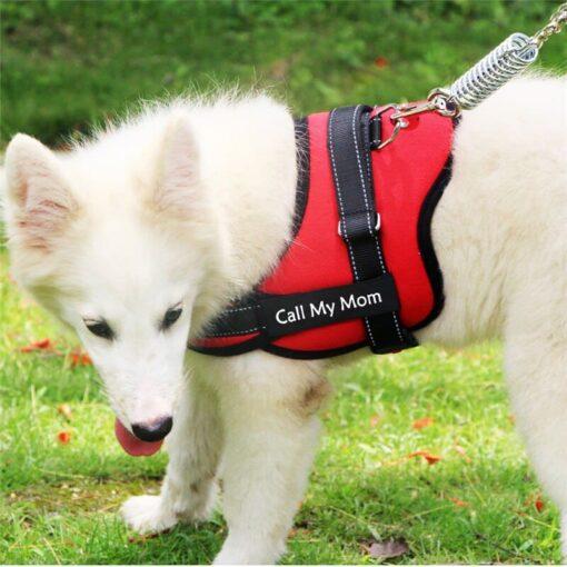 Hondentuig met naam en telefoonnummer