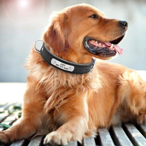 Halsband hond met naam en telefoonnummer 3 kleuren leer