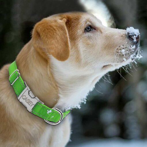 Halsband hond met naam en telefoonnummer nylon reflecterend