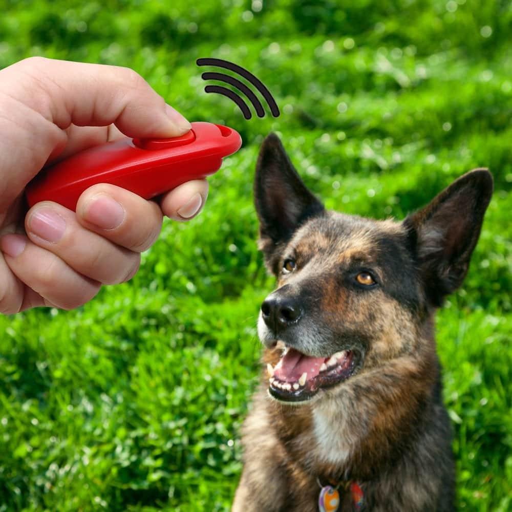 32168 kavwtn - Hoe leer je jouw puppy of hond een hondenfluit of klik signaal aan?