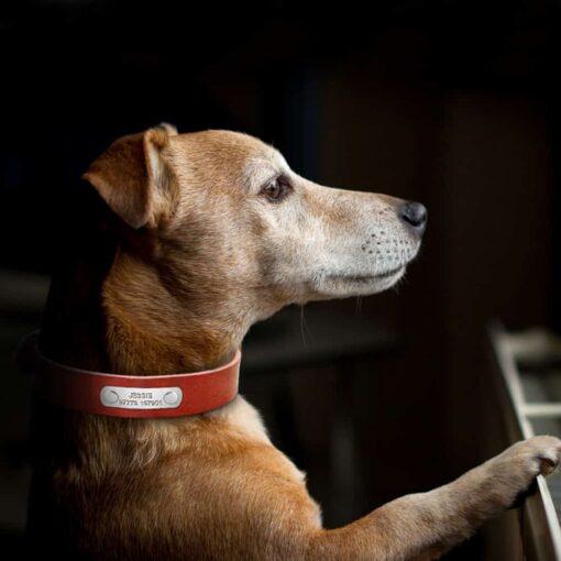 hondenhalsband met naam en telefoonnummer bruin leer