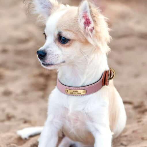 Halsband hond met naam en telefoonnummer leer gewatteerd reflecterend