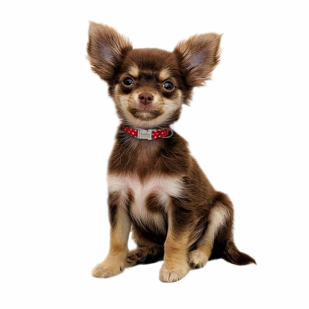 4046b9448c06bbefc271c9ddc0f632d4 - Halsband hond met naam en telefoonnummernylon3 kleuren