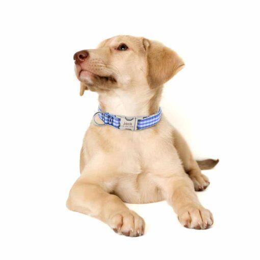 Halsband hond met naam en telefoonnummer nylon gestreept