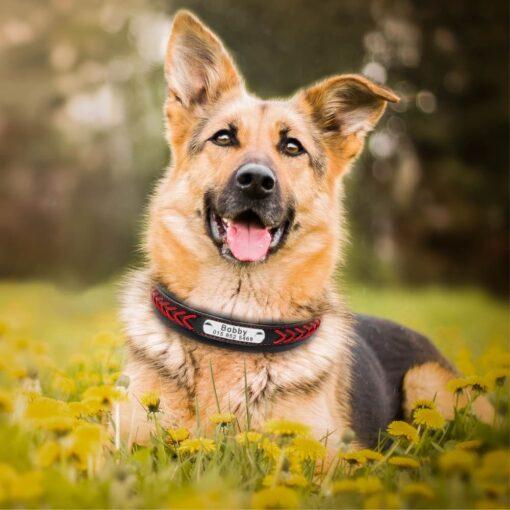 5393 s5ubzu 510x510 - Halsband hond met naam en telefoonnummer robuust