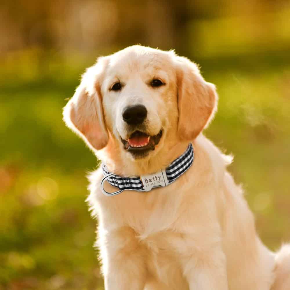 53b3c39e21a3300eace09211a29124b4 - Halsband hond met naam en telefoonnummer nylon gestreept