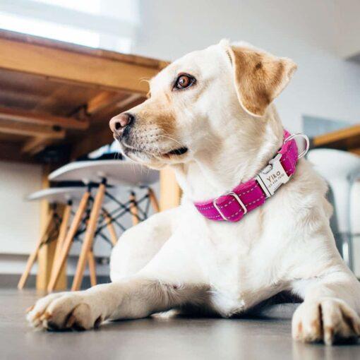 5698 5aneag 510x510 - Halsband hond met naam en telefoonnummer nylon gewatteerd