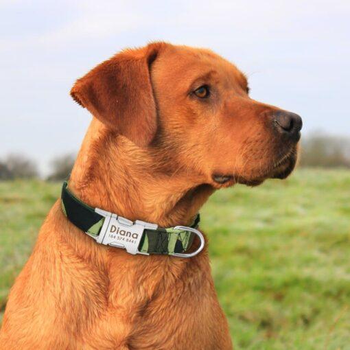 5722 gizlin 510x510 - Halsband hond met naam en telefoonnummer nylon 6 patronen