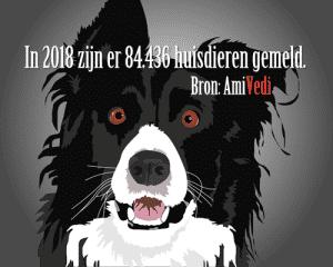 AmiVedi 2 300x240 - Koop een halsband met naam en telefoonnummer voor je hond of kat