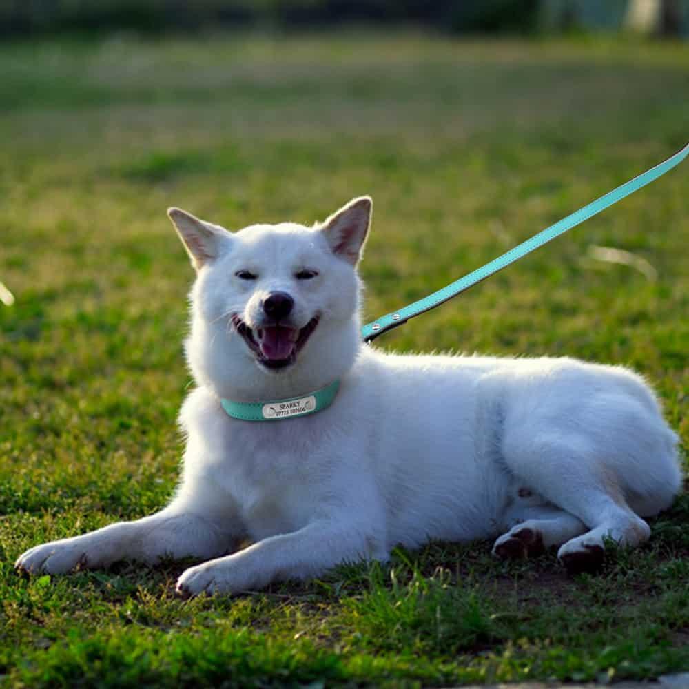 HTB1C6ptQFXXXXaQaXXXq6xXFXXXF - Halsband hond met naam en telefoonnummer met riem 4 kleuren