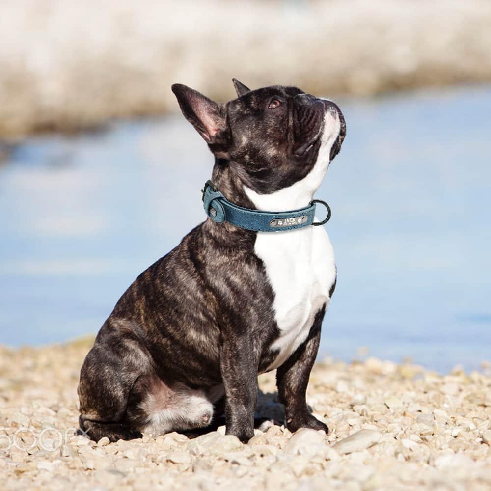 HTB1QIg8upuWBuNjSszbq6AS7FXaU - Halsband hond met naam en telefoonnummer gevoerd leer
