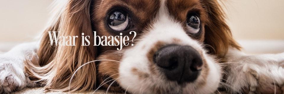 Waar is baasje 1 - Waarom een halsband, hondentuig met naam en telefoonnummer?