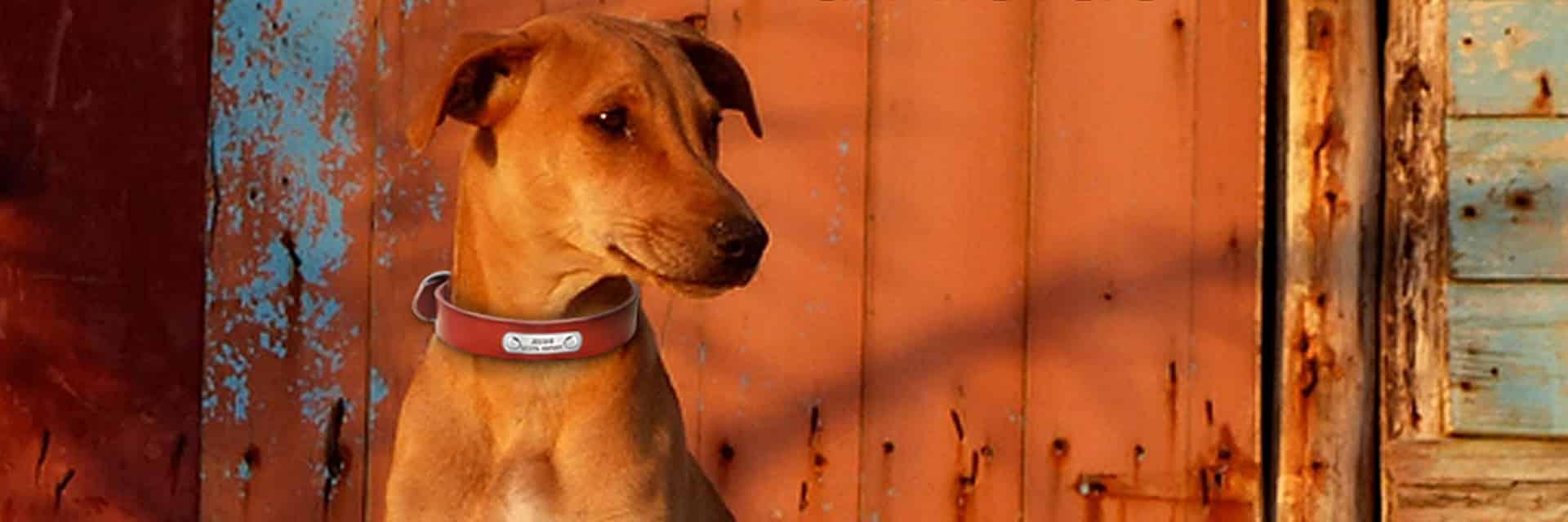 halsband met naam en telefoonnummer 10 - Halsband hond met naam en telefoonnummer van leer