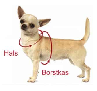 halsborstkas - Hondentuig met naam en telefoonnummer